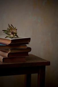 レウカデンドロンと古い本の写真素材 [FYI01695514]