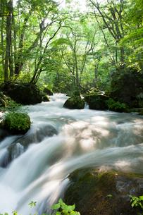 夏の奥入瀬渓流 阿修羅の流れの写真素材 [FYI01695610]