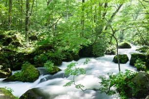 夏の奥入瀬渓流 阿修羅の流れの写真素材 [FYI01695730]