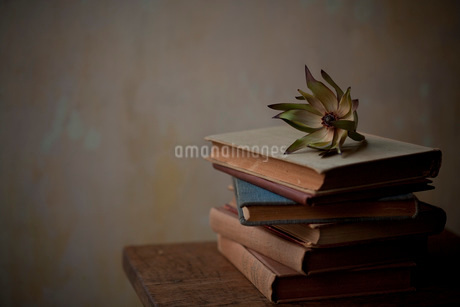 レウカデンドロンと古い本の写真素材 [FYI01695744]