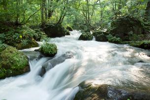 夏の奥入瀬渓流 阿修羅の流れの写真素材 [FYI01695766]