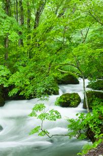 夏の奥入瀬渓流 阿修羅の流れの写真素材 [FYI01695850]