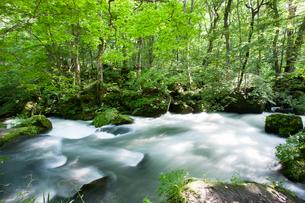 夏の奥入瀬渓流 阿修羅の流れの写真素材 [FYI01696721]