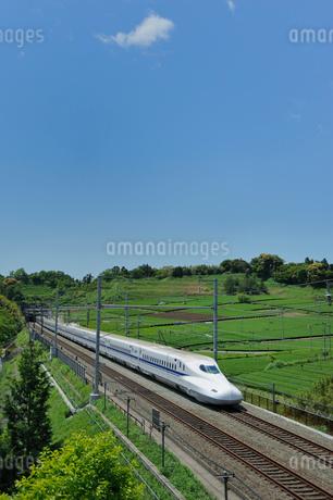茶畑と東海道新幹線の写真素材 [FYI01698341]