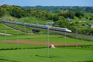 茶畑と東海道新幹線の写真素材 [FYI01698417]