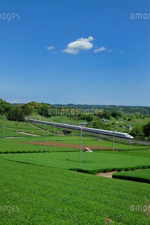 茶畑と東海道新幹線の写真素材 [FYI01698465]