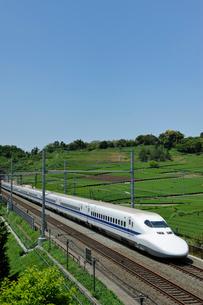 茶畑と東海道新幹線の写真素材 [FYI01698492]