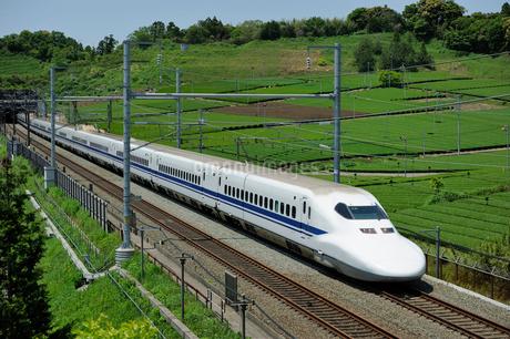 茶畑と東海道新幹線の写真素材 [FYI01698839]