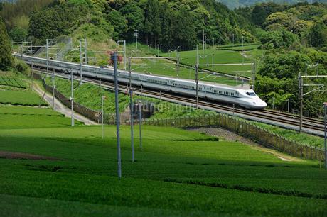 茶畑と東海道新幹線の写真素材 [FYI01698899]
