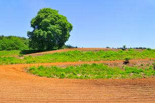 耕された畑と一本のクルミの木の写真素材 [FYI01699339]
