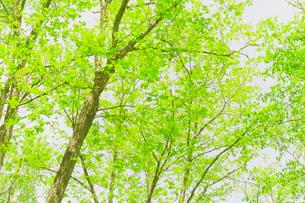 新緑の森の写真素材 [FYI01699426]