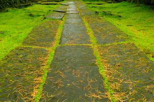 参道の石畳の写真素材 [FYI01699483]