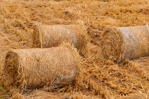藁束と水田の写真素材 [FYI01699513]