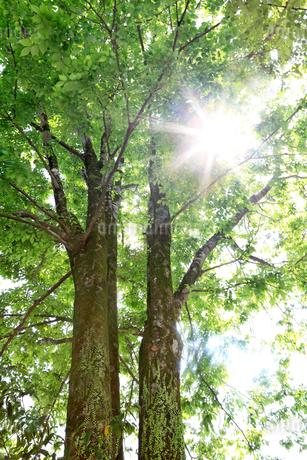 新緑と木漏れ日の写真素材 [FYI01699679]
