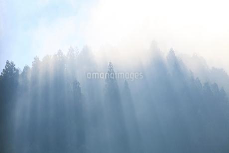 朝の光芒と森の写真素材 [FYI01699704]