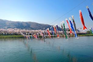 北上川と北上展勝地の写真素材 [FYI01699714]