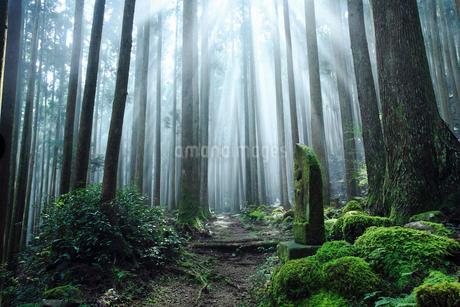 霧に包まれた熊野古道の写真素材 [FYI01699717]