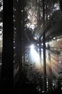 熊野古道から見た森の木漏れ日の写真素材 [FYI01699779]