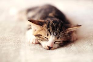 眠る子猫の写真素材 [FYI01699878]