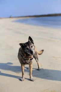 首を傾げて飼い主の指示を待つ犬の写真素材 [FYI01699925]