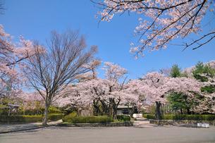 水沢公園の写真素材 [FYI01700095]