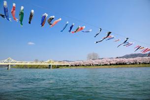 北上川と北上展勝地の写真素材 [FYI01700162]