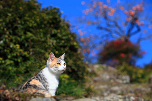 空を見上げる野良猫の写真素材 [FYI01700521]
