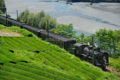 大井川鉄道のSLと茶畑の写真素材 [FYI01700560]