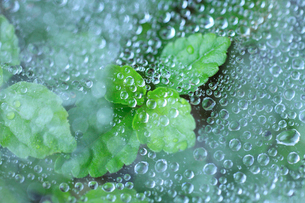 クモの巣についた水滴と草の写真素材 [FYI01700570]
