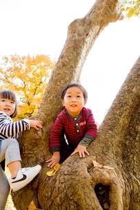 秋の公園で遊ぶ男の子と女の子の写真素材 [FYI01700641]