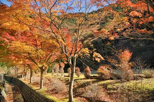 寸又峡の紅葉の写真素材 [FYI01700737]