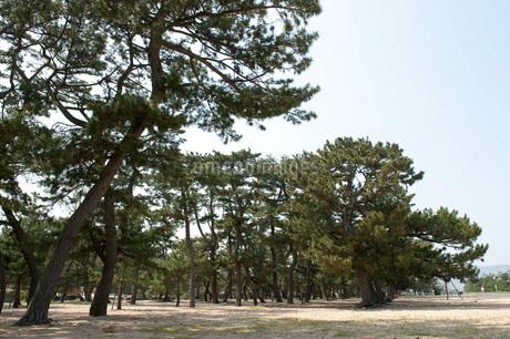 津田の松原の写真素材 [FYI01700765]