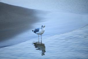 渚とカモメの写真素材 [FYI01700815]