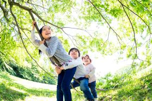 公園で木の枝につかまる3人兄弟の写真素材 [FYI01700947]
