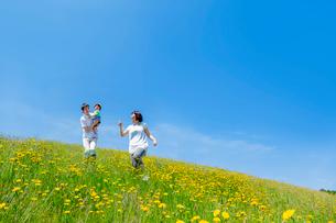 野花の咲く丘で遊ぶ親子の写真素材 [FYI01700977]