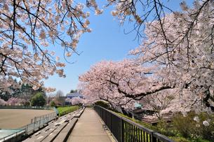 水沢公園の写真素材 [FYI01701103]