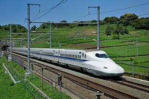 茶畑と東海道新幹線の写真素材 [FYI01701300]