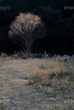 葉を落とした木の写真素材 [FYI01702243]