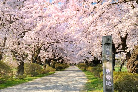 桜咲く北上展勝地の写真素材 [FYI01702291]