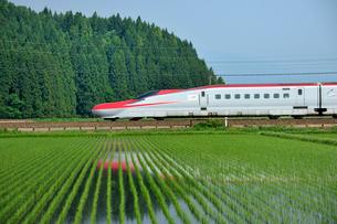 秋田新幹線こまちの写真素材 [FYI01702391]