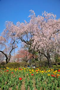 水沢公園の写真素材 [FYI01703068]