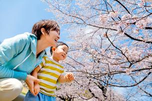 桜の咲く公園で遊ぶ母親と息子の写真素材 [FYI01703543]