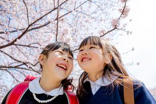 桜の咲く遊歩道で笑う新一年生と新入園児の姉妹の写真素材 [FYI01703569]