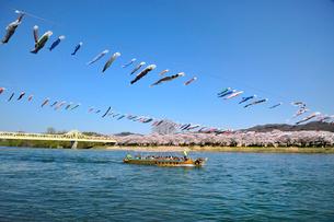 北上川と北上展勝地の写真素材 [FYI01703573]
