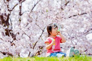 桜の咲く土手でシャボン玉を吹く女の子の写真素材 [FYI01703607]