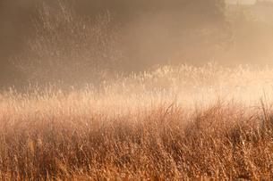 朝霧に包まれた草原の写真素材 [FYI01703633]