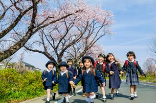 桜の咲く道を歩く新一年生と新入園児の写真素材 [FYI01703670]