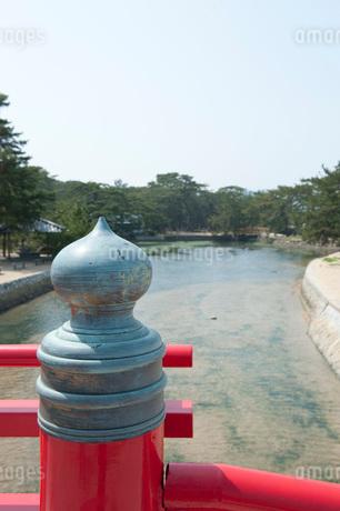 津田の松原の写真素材 [FYI01703680]