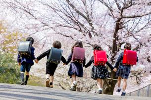 桜の咲く公園を走る新一年生の後ろ姿の写真素材 [FYI01703689]
