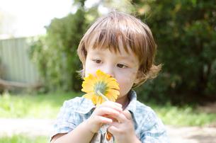 オレンジの香りを嗅ぐハーフの男の子の写真素材 [FYI01703755]